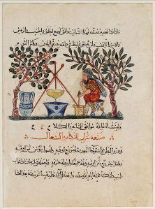 Folio_Materia_Medica_Dioscurides_Met_13.152.6