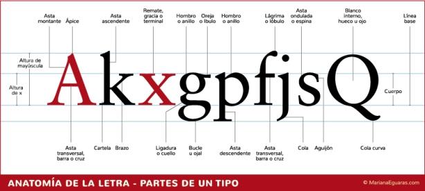 Tipografia_Anatomia-de-la-letra_Partes-de-un-tipo_marianaeguaras (1)
